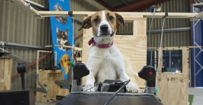 This Doggie Team Of 12 Is Being Trained To Pilot Planes At A Real Doggie Flight School