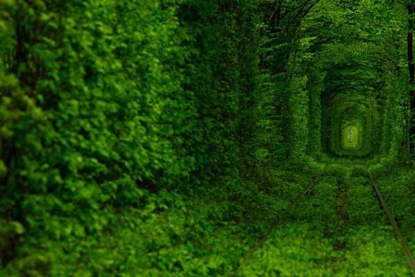 ukraine leafy tunnel 1