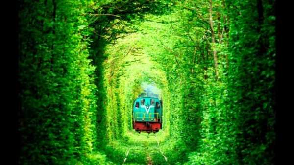 ukraine leafy tunnel 2