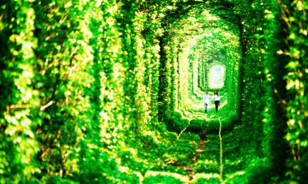 ukraine leafy tunnel 3