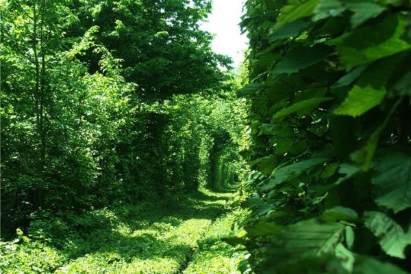 ukraine leafy tunnel 5