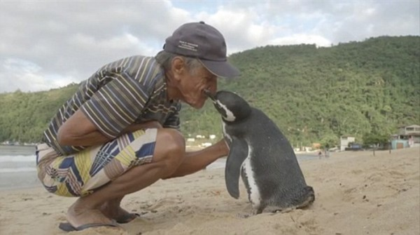 man and penguin 1