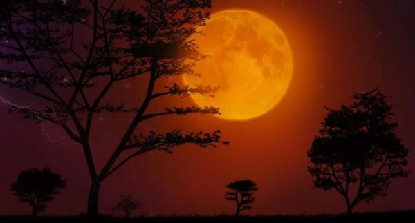 night sky sight 7
