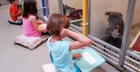 shelter buddies reading program 2
