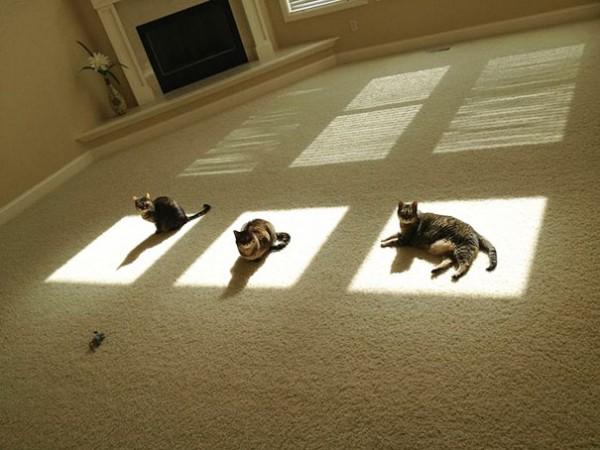 sun cat 14