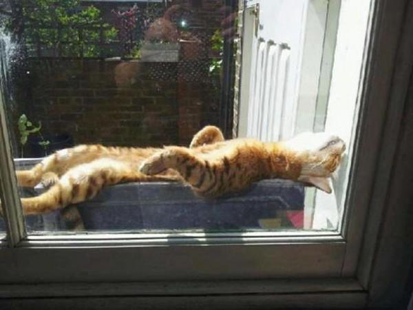 sun cat 15