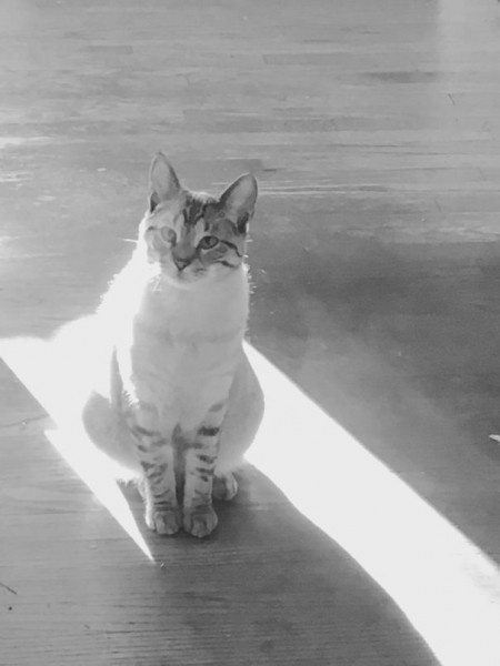 sun cat 18