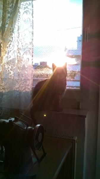 sun cat 19