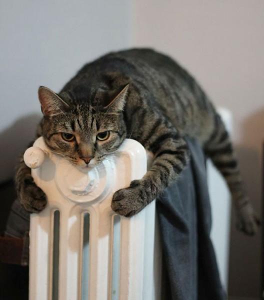 sun cat 4