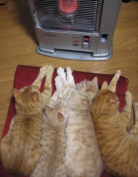 sun cat 8