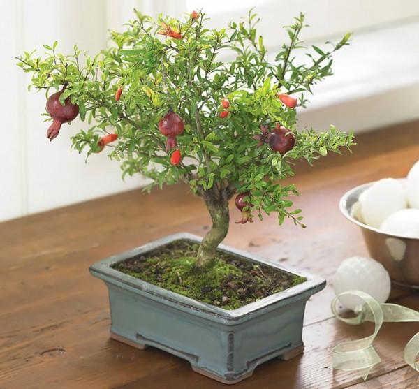 bonsai trees 9