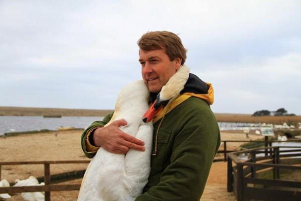 swan hug 1