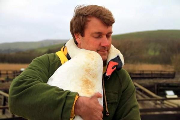 swan hug 2