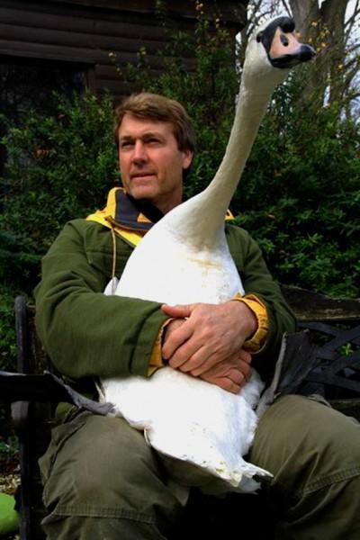 swan hug 5
