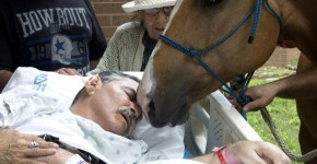 This Video Of A Dying Vietnam Man With His Two Beloved Horses For The Last Time Is Just Heartwarming
