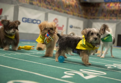 puppy bowl xiii 2