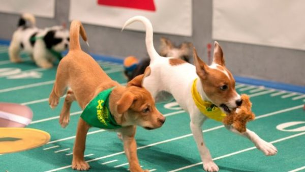 puppy bowl xiii 4