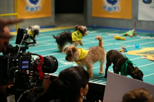 puppy bowl xiii 5
