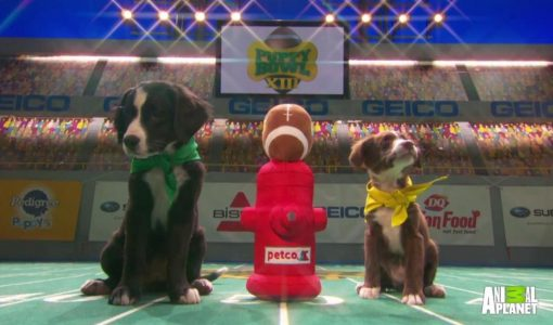 puppy bowl xiii 7