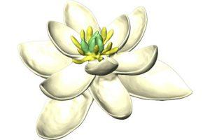 firstflower