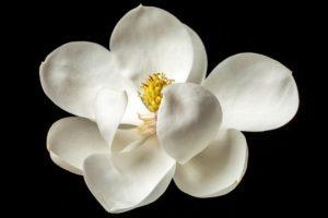 firstflower2